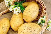 Potato yellow with basket and flower on sacking