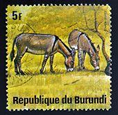 BURUNDI - CIRCA 1964: A stamp printed in Burundi shows equus asinus wild animal circa 1964.