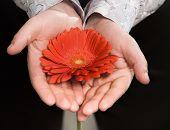 Men's Hands Holding A Flower