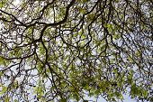 Abstract Tree Branches From Below