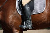 foto of girth  - Close up of rider legs with spurs on chestnut horse - JPG