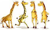 Illustration of different poses of giraffe