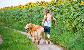 little girl walks on the leash with a golden retriever, go away in field
