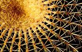 Cactus Pumpkin Spikes
