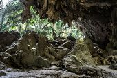 image of cave  - Beautiful cave looking out to the other side will see the light and the trees of the cave - JPG