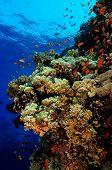 foto of marines  - Wall reef with lots of marine life - JPG