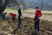foto of plowing  - People sowing potato tubers into the plowed soil - JPG