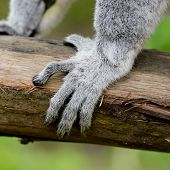 picture of rainforest animal  - Closeup ring - JPG