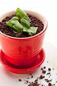 picture of sponge-cake  - Granny Dessert Bowl with Sponge Cake - JPG