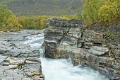 picture of vegetation  - Creek - JPG