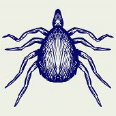 picture of ixodes  - Mite bug - JPG