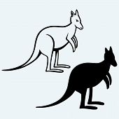 picture of kangaroo  - Kangaroo image isolated on light blue background - JPG