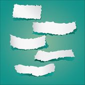 foto of cut torn paper  - Vector illustration of Pieces of torn papers collection on greenish background - JPG