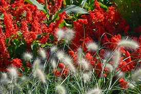 picture of fountain grass  - Spring Garden with Close Up of Fountain Grass - JPG