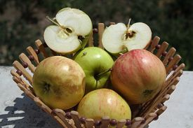 stock photo of orchard  - beautiful natural juicy green and red apples in wooden basket on the nature - JPG