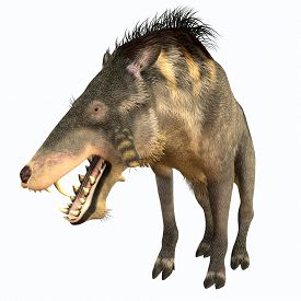 foto of omnivore  - Entelodon was an omnivorous pig that lived in Europe and Asia in the Eocene through the Oligocene Periods - JPG
