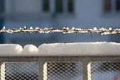 Barbed Wire With A Snow