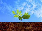 Green shoot, soil & cloudy sky