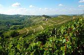 Vineyards panorama, Barbaresco hills, piemonte, Italy