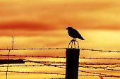 Bird sitting on prison fence at sunset.