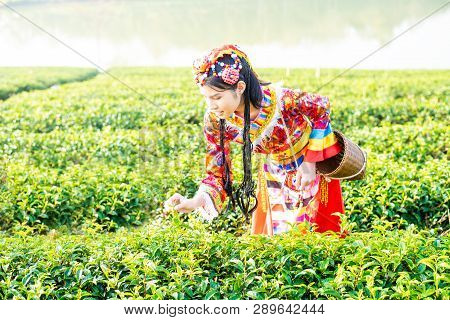 Farmer Picking Tea Leave In