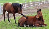 Animal sympathy - one horse puts a foot on another