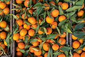 A Typical Market Stall Selling Oranges To Tourists In Marrakech. Traditional Morocco Fruits Oranges  poster