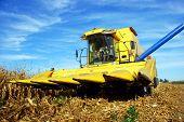 a Combine harvesting maize