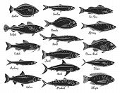 Silhouettes Fish. Isolated Seafood With Bream, Mackerel, Tuna Or Sterlet, Catfish, Codfish And Halib poster