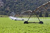 Irrigation pivot system watering a carrot field on a farm