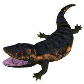 Dendrerpeton Amphibian Head 3d Illustration - Dendrerpeton Was A Carnivorous Amphibian Animal That L poster