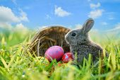 Easter Bunny And Easter Eggs On Green Grass Outdoor / Little Gray Rabbit Sitting With Basket Nest An poster