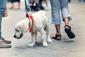 stock photo of street-walker  - People walking on the street with dog on leash - JPG