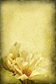 Magnolia Background