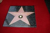 LOS ANGELES - NOV 8:  Javier Bardem's star at the Hollywood Walk of Fame Star Ceremony for Javier Ba