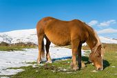 Horse Grazing In The Snow