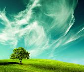 green landscape, ecology