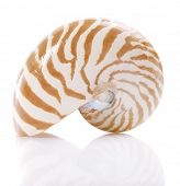 Nautilus Pompilius Meeresmuschel, isolated on white, flachen dof