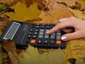 The Calculator On Leaves
