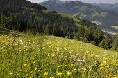 Wild flowers in the German alps, Bavaria