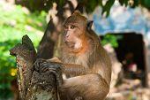 Monkey Holding The Tree