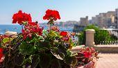 Roses In Malta