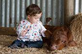 Infant Patting A Calf