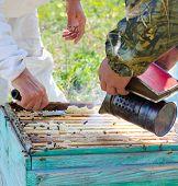 Beekeepers At Work