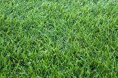 achtergrond van groen gras, close-up foto van de met gras begroeide dekking
