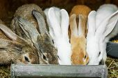 image of rabbit hutch  - Small rabbits in cage drinking - JPG
