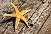 starfish caught in an old piece of tree bark