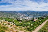 View Over River Douro
