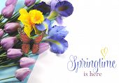 Springtime Is Here Sample Text On White Background With Blue, White And Purple Silk Iris, Yellow Daf