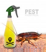 stock photo of cockroach  - Plastic sprayer with insecticide and big cockroach - JPG